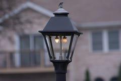Лампа в парке стоковая фотография rf