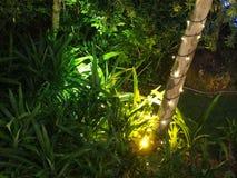 Лампа и дерево Стоковые Изображения