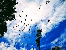 Лампа и предпосылка и голуби неба стоковое изображение rf