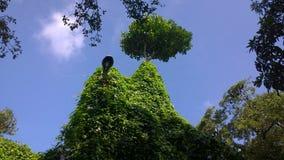 Лампа природы Стоковая Фотография