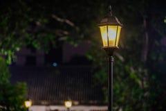 Лампа среди зеленых лист стоковые фотографии rf