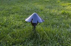 Лампа лужайки на зеленой траве Стоковая Фотография RF