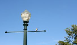 Лампа Steet с птицей садилась на насест на ей Стоковая Фотография RF