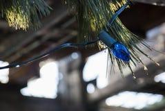 Лампочка гирлянды голубая с ветвями Стоковая Фотография RF