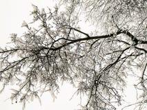 Снег на ветвях стоковое изображение