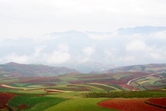 ландшафты полей стоковое изображение