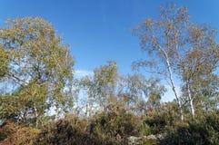 ландшафты пустоши в лесе Фонтенбло стоковая фотография