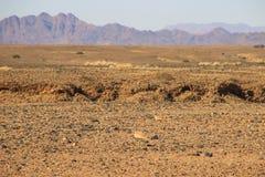 Ландшафты пустыни с горами на юге Намибии и 2 неброских желтых птиц Засушливый сезон стоковое фото rf