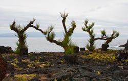 ландшафт Азорских островов Стоковая Фотография RF