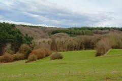 Ландшафт Арденн, свертывая hilsl с соснами и лиственные деревья под темными облаками стоковое изображение rf