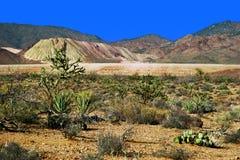 ландшафт Аризоны Стоковое Изображение RF