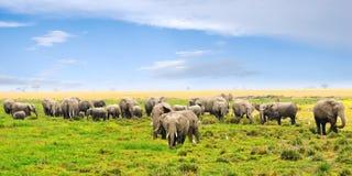 ландшафт африканских слонов Стоковое Изображение