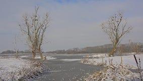 Ландшафт болота и предусматриванный в снеге и бассейне с мертвыми деревьями с гнездами баклана стоковое фото rf