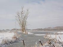 Ландшафт болота и предусматриванный в снеге и бассейне с мертвым деревом с гнездами баклана стоковое фото rf