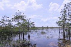 ландшафт болотистых низменностей кипариса Стоковое Изображение RF