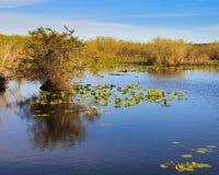 Ландшафт болотистых низменностей Стоковое фото RF