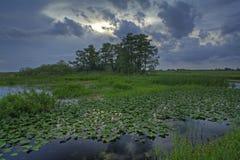ландшафт болотистых низменностей Стоковые Фотографии RF
