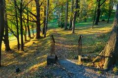 Ландшафт весны леса - лесные деревья с травой на переднем плане и солнечном свете светя через лесные деревья стоковое фото