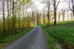 Ландшафт весны леса - строка сосен леса и узкого пути в лесе осветила мягким солнечным светом весны Стоковое Изображение RF