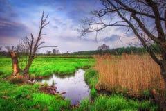 Ландшафт весны одичалой природы в утре с старыми деревьями на береге малого реки Стоковая Фотография