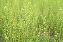Ландшафт весны, поле зеленой травы Стоковая Фотография RF