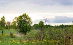 Ландшафт весны с деревом и небом стоковые фотографии rf
