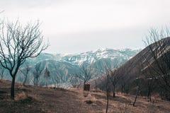 Ландшафт весны с плавя снегом и соснами стоковые изображения