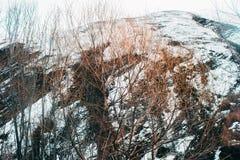 Ландшафт весны с плавя снегом и соснами стоковая фотография