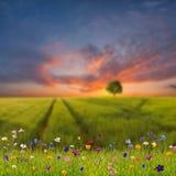 Ландшафт весны с полевыми цветками и лугом Стоковые Фото