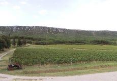 Ландшафт виноградника около Novi Vinodolski Хорватии стоковые изображения