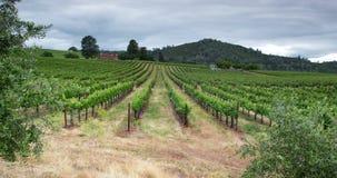 Ландшафт виноградника видеоматериал