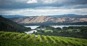 Ландшафт виноградника сток-видео