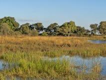 Ландшафт вокруг озера, ресервирование Bwabwata, Намибия стоковое фото