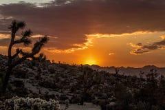Ландшафт восхода солнца пустыни Калифорнии стоковое изображение rf