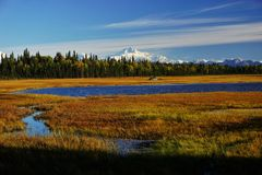 Ландшафт в Аляске стоковые фото