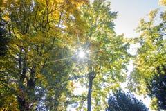 Ландшафт в октябре осени красочные desiduous деревья - солнечный взгляд осени Сад академичного университета Fomin ботанический дл стоковая фотография