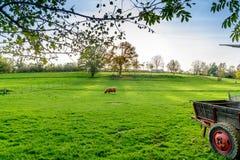Ландшафт в осени в бельгийце Арденн Стоковое Фото