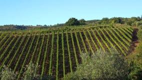 Ландшафт в сентябре с виноградником Италия Тоскана сток-видео