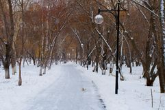 Ландшафт глубок в осени при снег падая и не пока упаденный желтый цвет выходит на деревья Стоковое Изображение RF