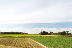 ландшафт голландеца земледелия Стоковое Фото