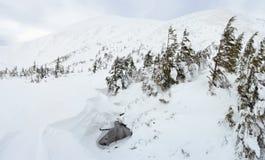 Ландшафт горы зимы в Карпатах стоковые изображения