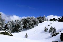 Ландшафт горы зимы с хвойными деревьями покрытыми снежинками Посветите сини и облачному небу стоковые фотографии rf