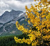 Ландшафт горы, канадские скалистые горы Стоковое Изображение
