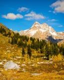 Ландшафт горы лиственницы падения Стоковые Изображения