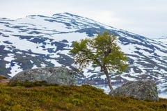 Ландшафт горы Норвегии сценарный Стоковое фото RF