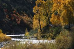 Ландшафт горы падения деревьев Aspen стоковое изображение rf
