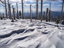 Ландшафт горы с деревьями и детальными трещинами снега стоковое фото