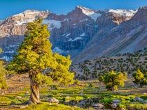 Ландшафт горы с зеленым деревом можжевельника в солнечности на утесе стоковые фото