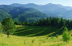 Ландшафт горы с лесом и лугом в лете Стоковые Изображения RF