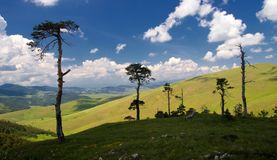 Ландшафт горы Zlatibor с старыми соснами Стоковые Изображения RF